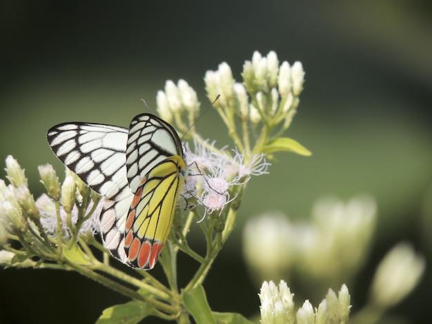 花にとまる蝶のセレクティブフォーカスショット