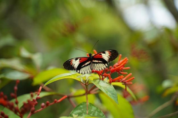 꽃에 앉은 나비의 선택적 초점 샷