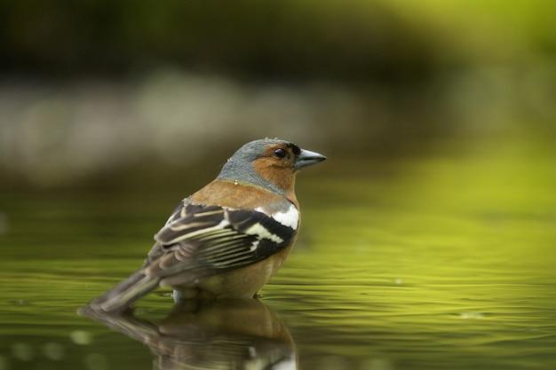 귀여운 hawfinch 새의 선택적 초점 샷
