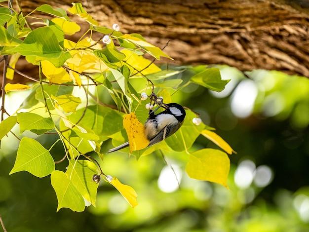 나뭇가지에 앉아 있는 귀여운 일본 가슴의 선택적 초점