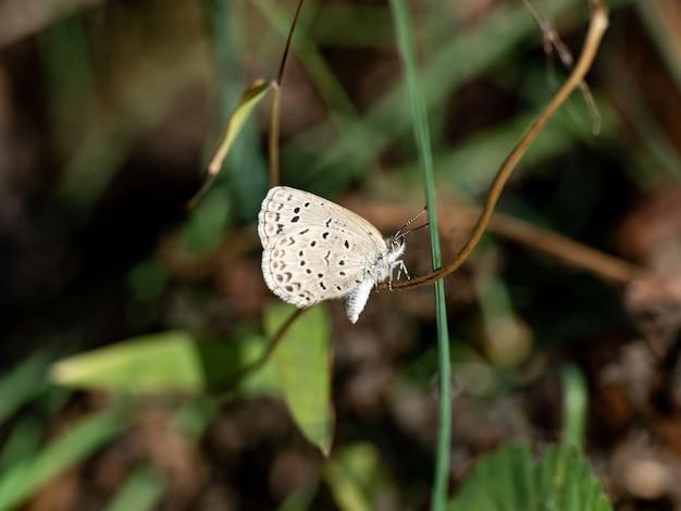 나뭇 가지에 앉아 귀여운 창백한 잔디 블루 나비의 선택적 초점 샷