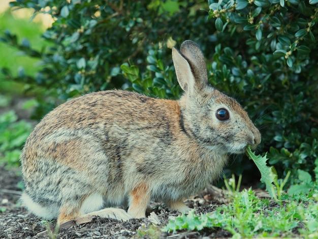 공원에서 귀여운 토끼의 선택적 초점 샷