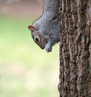 흐릿한 나무에 너트를 먹는 귀여운 다람쥐의 선택적 초점 샷