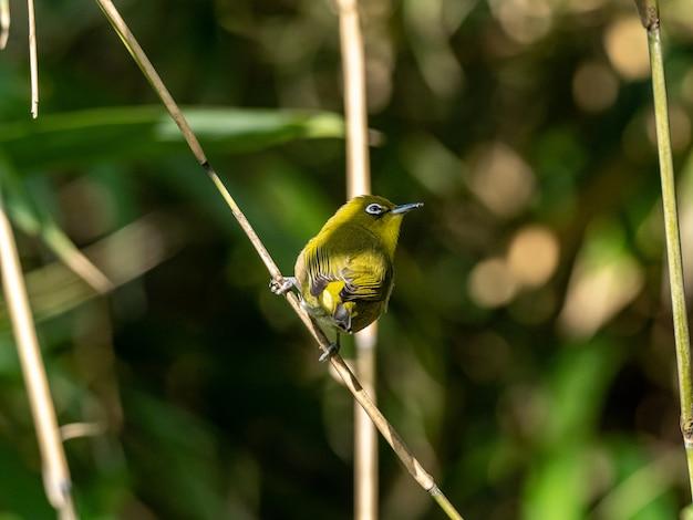 大和の泉の森の小枝で休んでいるかわいいメジロのセレクティブフォーカスショット