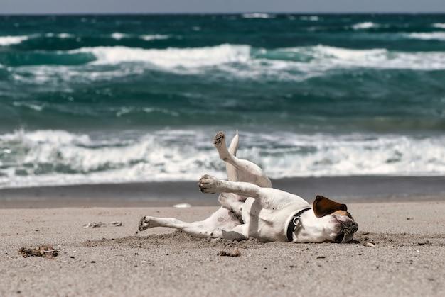 Селективный фокус снимка забавной собаки, лежащей на песке