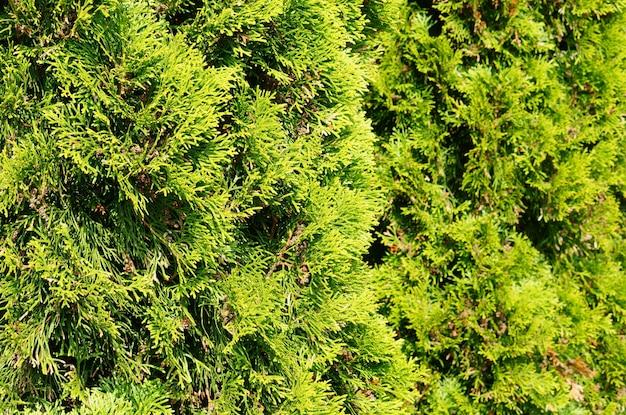 햇빛으로 덮여 녹색 정원 나무의 선택적 초점 샷