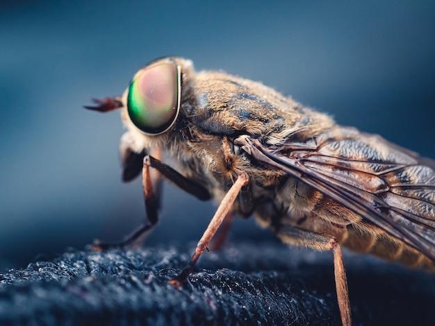 Снимок комнатной мухи с селективным фокусом на темном размытом фоне