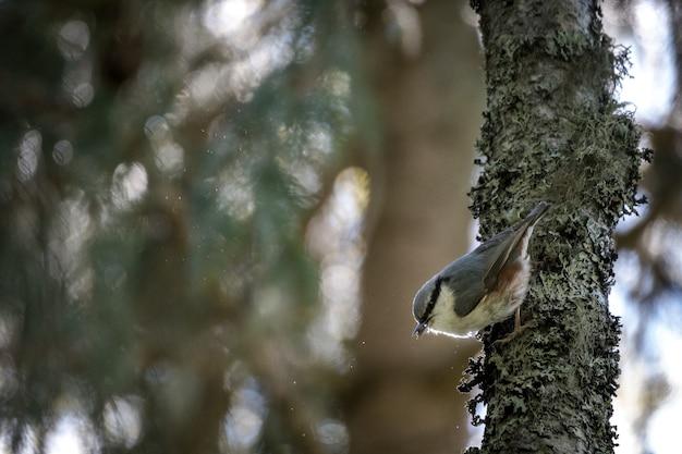 木の枝にキングバードの選択的なフォーカスショット