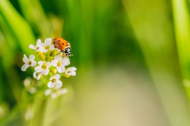 화창한 날에 캡처 한 필드에서 꽃에 무당 벌레 딱정벌레의 선택적 초점 샷
