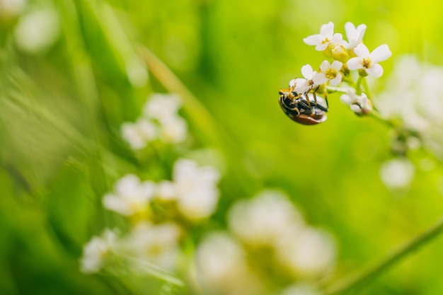 晴れた日に撮影されたフィールドの花にテントウムシの選択的なフォーカスショット