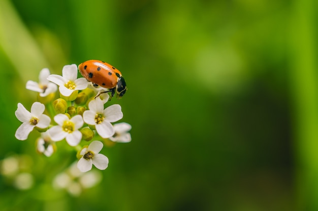 화창한 날에 캡처 한 멀리에서 꽃에 무당 벌레 딱정벌레의 선택적 초점 샷