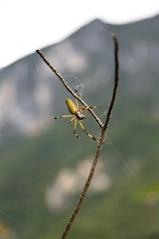 나뭇 가지에 nephilidae 거미의 선택적 초점 샷