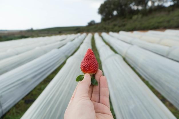 딸기를 손에 들고 있는 사람의 선택적 초점
