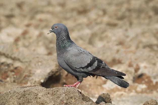 대낮에 야외에 앉아 있는 비둘기의 선택적 초점