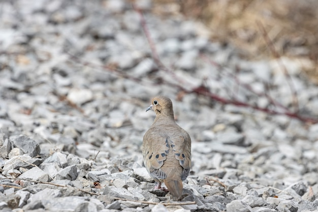 바위에 서있는 비둘기의 선택적 초점 샷