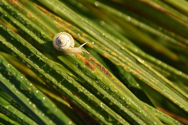 Селективный снимок маленькой улитки на росистой зеленой траве на утреннем солнце