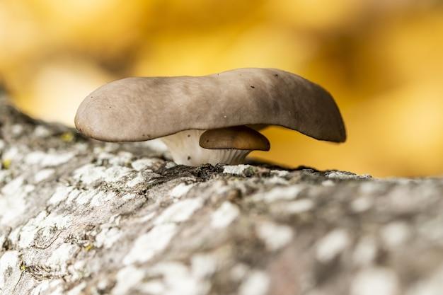 흐릿한 자연 배경을 가진 나무 줄기에 있는 이상한 버섯의 선택적 초점