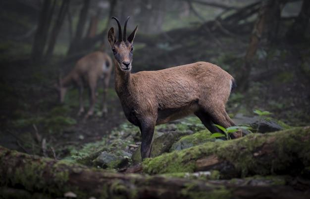 森の真ん中に野生動物のセレクティブフォーカスショット