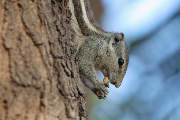 낮 동안 야외에서 사랑스러운 회색 다람쥐의 선택적 초점 샷