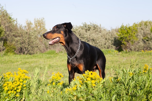 잔디에서 노는 사랑스러운 강아지의 선택적 초점 샷