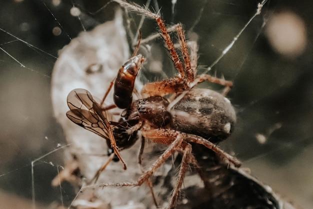 거미줄에 걸린 곤충의 선택적 초점 샷