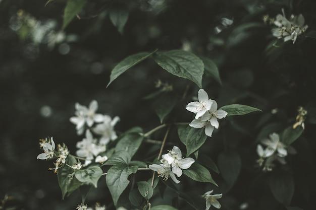 숲 한가운데에 있는 덤불에 있는 아름답고 작은 흰색 꽃의 선택적 초점