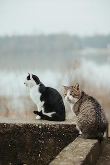돌 표면에 있는 아름다운 고양이의 선택적 초점