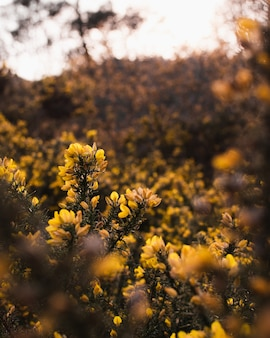 녹색 숲으로 둘러싸인 아름다운 노란색 꽃의 선택적 초점 샷