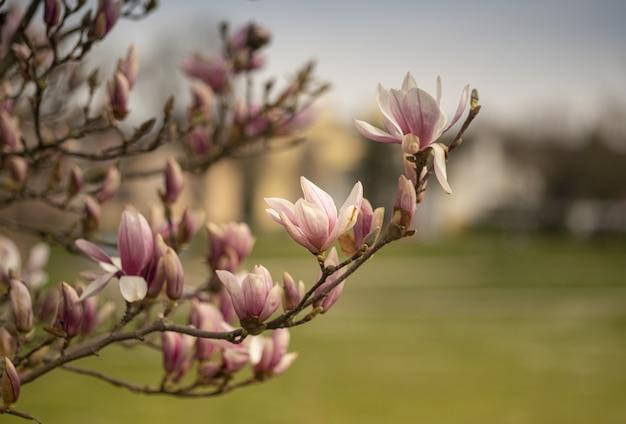 꽃이 만발한 나뭇가지의 선택적 초점 샷