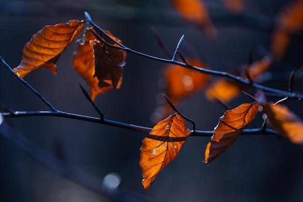 クロアチア、ザグレブのマクシミール公園の木の枝に茶色の葉の選択的なフォーカスショット