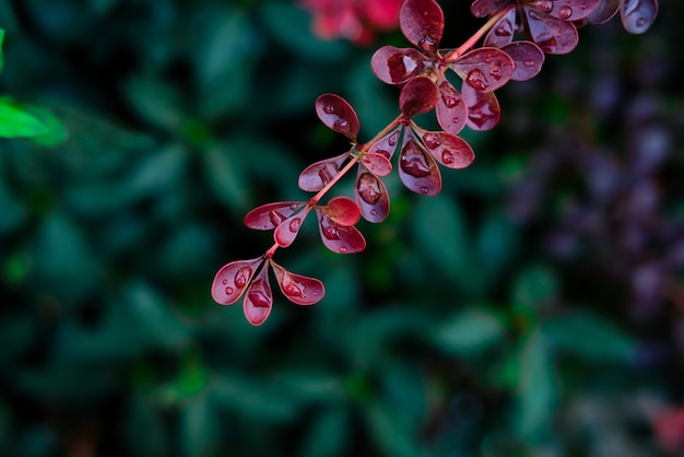 이슬 덮인 화려한 잎의 선택적 초점 샷