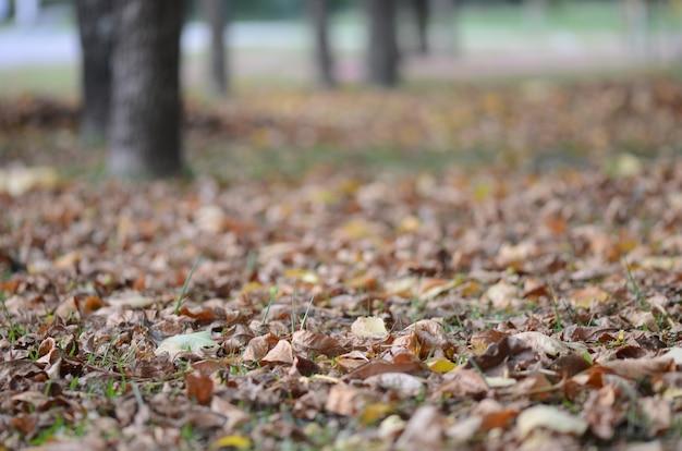 地面の乾燥した葉の選択的なフォーカスショット