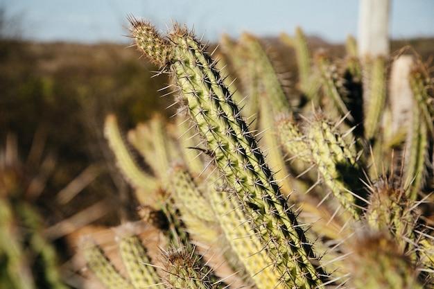 エキゾチックなサボテンの植物のセレクティブフォーカスショット