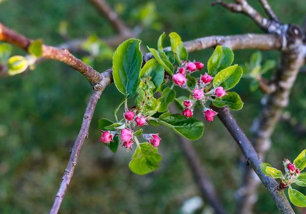 森の真ん中にある木にエキゾチックなピンクの花の選択的なフォーカスショット