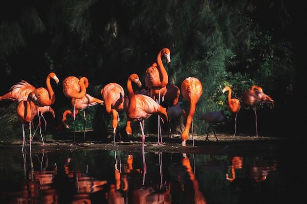 木々に囲まれた水の近くのフラミンゴのセレクティブフォーカスショット