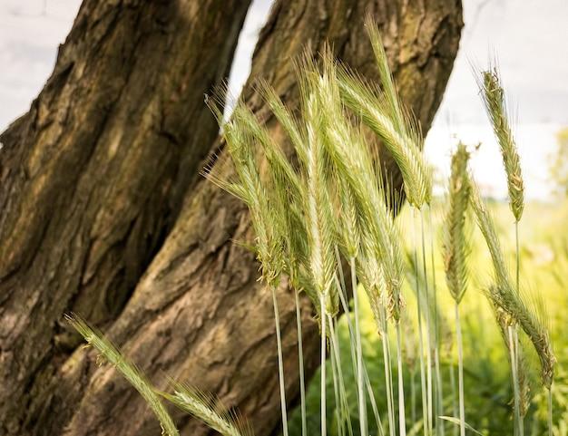 Селективный фокус выстрел травы в поле