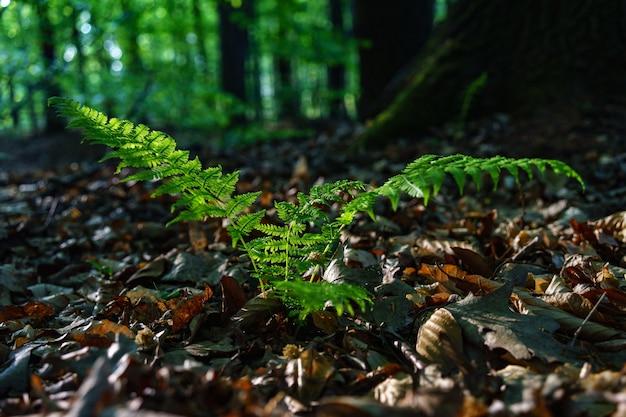 마른 잎으로 가득한 필드에 녹색 일반적인 타조 식물의 선택적 초점 샷 무료 사진