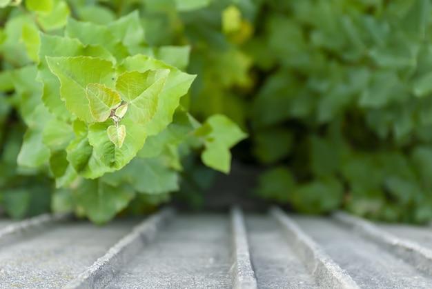 コンクリート表面の緑の葉の選択的なフォーカスショット