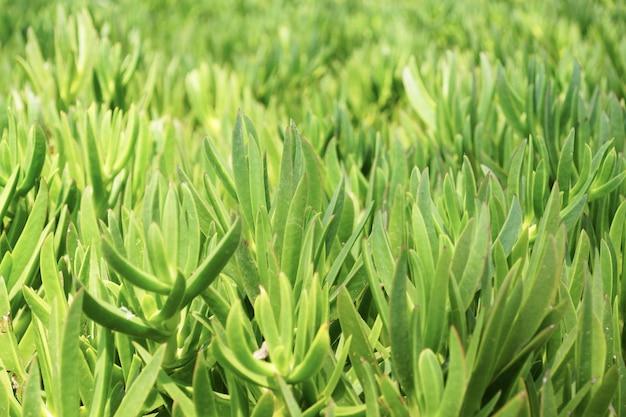 庭の緑の狭い葉の選択的なフォーカスショット