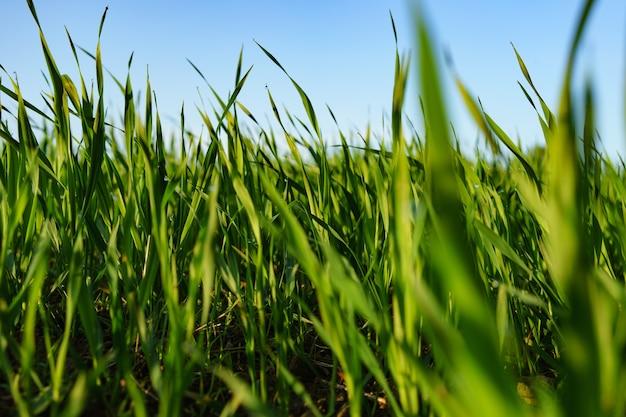 青い空の下の緑の植物畑の選択的なフォーカスショット