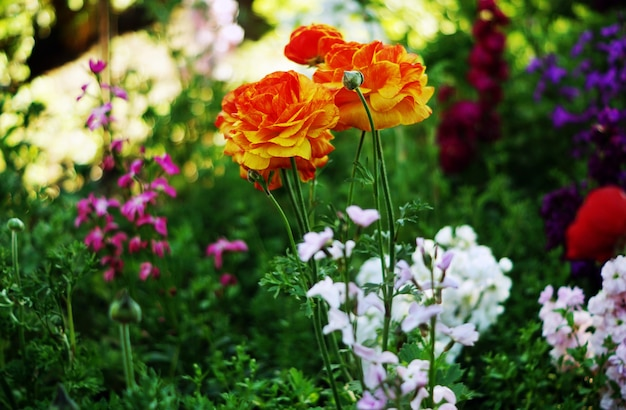 柔らかい影のオレンジと黄色のバラの選択的なフォーカスショット