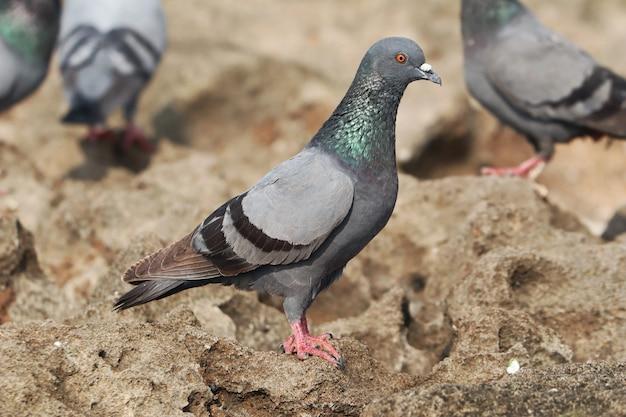 日中の屋外に腰掛けた鳩のセレクティブフォーカスショット