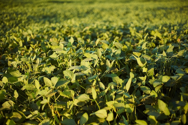 Селективный снимок растений с зелеными листьями на поле в дневное время