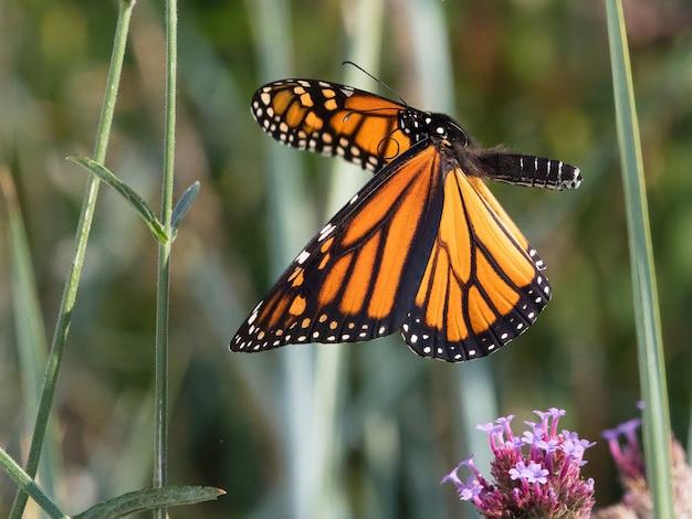 小さな花に斑点のある木の蝶の選択的なフォーカスショット