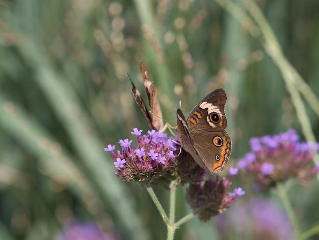 Селективный снимок пятнистой деревянной бабочки на маленьком цветке
