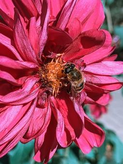 花粉を集めるミツバチのセレクティブフォーカスショット