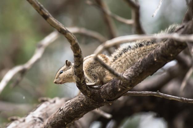 인도 팜 다람쥐의 선택적 초점 샷 프리미엄 사진