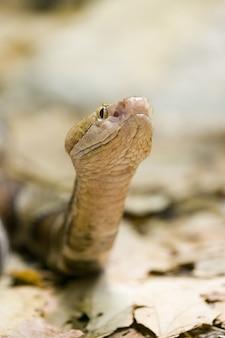 목재 방울뱀의 선택적 초점 샷