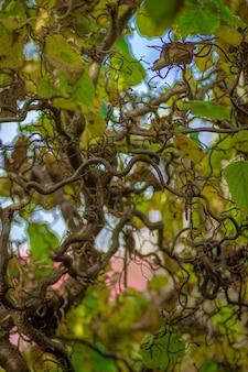 Селективный снимок виноградных растений, ползущих по дереву