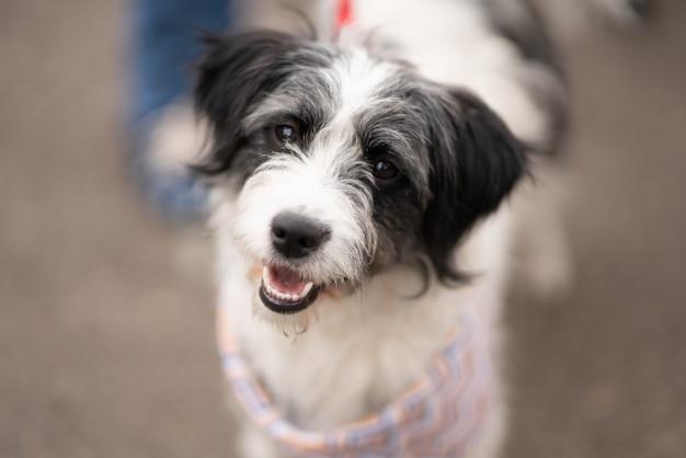흰색과 검은 색 havanese 강아지의 선택적 초점 샷